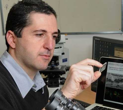 New Liver-on-Chip Could Be Used to Assess Mitochondrial Dysfunction, Screen for Safer Drugs