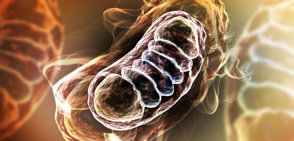 Improved Mitochondrial Function May Positively Affect Spinal Cord Injuries