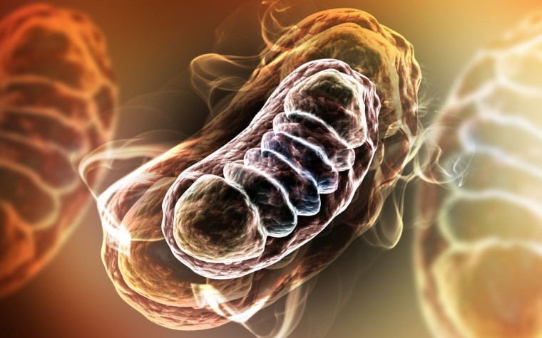 Mitochondrial State and Spinal Cord Injury