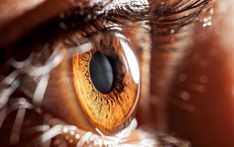 Protein Linked to Mitochondrial Dysfunction Speeds Up Age-related Eye Disorders in Mice