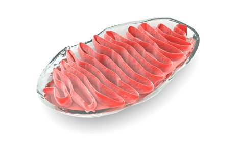 Protein with Role in Amyloid Plaques Also Seen to Affect Mitochondria in Study