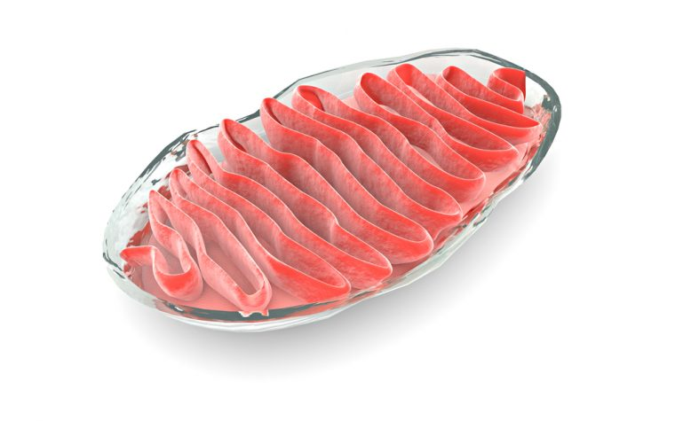 Mitochondria success finding