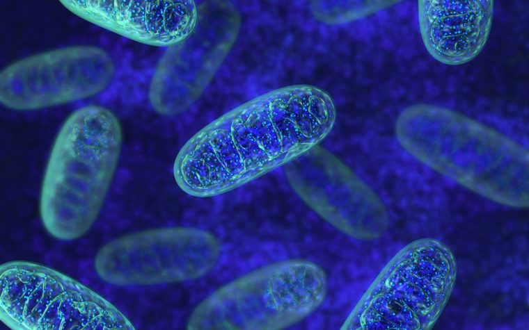 Southeast Regional Symposium on Mitochondrial Medicine is April 7-8 in Birmingham
