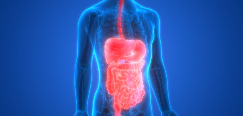 Effects of Mitochondrial Disease on Digestive System Reviewed, with Symptoms, Treatments