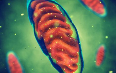 Higher Than Normal Mitochondrial DNA Movement May Play Role in Colorectal Cancer