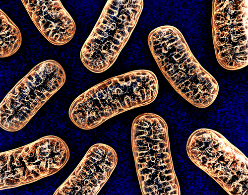 UCLA Researchers Find New Link Between Damaged Mitochondria and Age-related Diseases