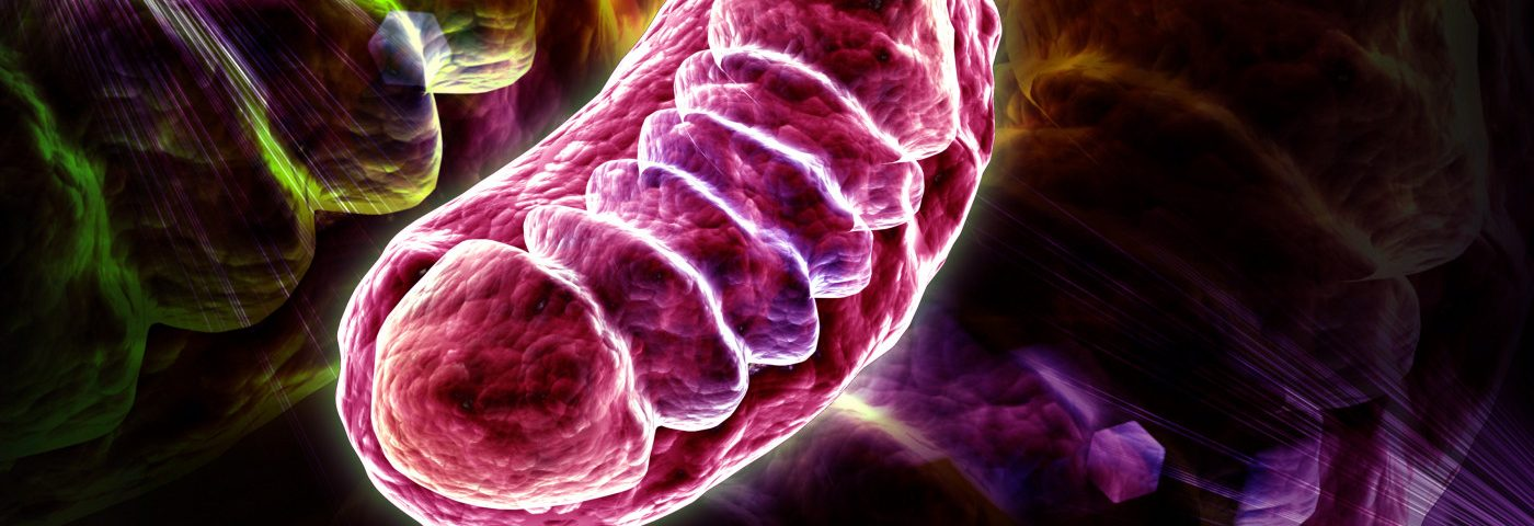 Device Detects Heart-related Mitochondrial Function in Real Time
